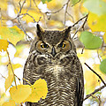 Great Horned Owl  by Saija  Lehtonen