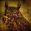 Great Horned Owl by Sandy Keeton