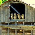 Great Horned Owls by Judy Garrett