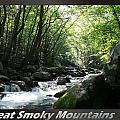 Great Smoky Mountains National Park 10 by Charles Fox