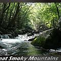 Great Smoky Mountains National Park 12 by Charles Fox
