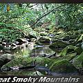 Great Smoky Mountains National Park 5 by Charles Fox