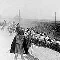 Greece Shepherds And Flocks - C 1909 by International  Images