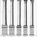 Greek And Roman Columns by Granger