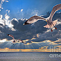 Greek Gulls With Sunbeams by Meirion Matthias