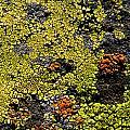 Green Algea by Sean Wray