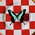 Green And Black Butterfly On Red Checker Plate by Garry Gay