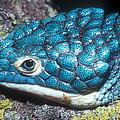 Green Arboreal Alligator Lizard by Dante Fenolio