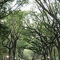 Green Arches  by Sonali Gangane