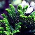 Green by Aunit Sharma