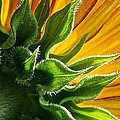 Green Backing by Susan Herber
