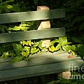 Green Bench by Jack Norton