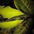 Green  by Beth Akerman