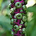 Green Buttons by Susan Herber