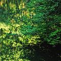 Green Dream by Donna Blackhall