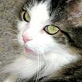 Green-eyed Cat by Inga Smith