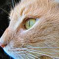 Green Eyes by Art Dingo