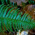 Green Fern by Tikvah's Hope
