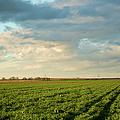 Green Field With Clouds by Topher Simon photography