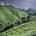 Green Fields On Hills by Axiom Photographic