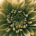 Green Flower by Dawn OConnor