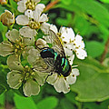 Green Fly by Debbie Portwood