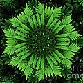 Green Forest Ferns Mandala - 2 by Renata Ratajczyk