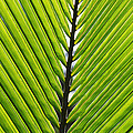 Green Fronds by Lauri Novak