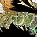 Green Fungi by Kaye Menner
