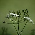 Green Garden by Dickon Thompson