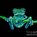 Green Ghost Frog by Nick Gustafson