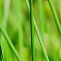 Green Green Grass Of Home by Joyce Dickens