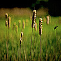Green Grow The Rushes O by Chris Lord