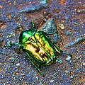 Green Junebug by Mariola Bitner