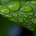 Green by Karen Ulvestad