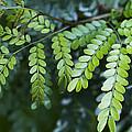 Green by Kathy Clark