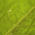 Green Leaf by Kathy Schumann