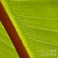 Green Leaves Series  8 by Heiko Koehrer-Wagner