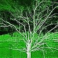 Green Magic Tree by Sheila Kay McIntyre