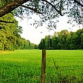 Green Pasture by Cristie Rieland