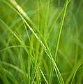 Green Prairie Grass by Steve Gadomski