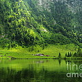 Green Reflections by Bela Torok