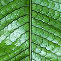 Green Scaly Leaf Pattern by Mike Nellums