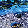 Green Sea Turtle Honu by Jerome Stumphauzer
