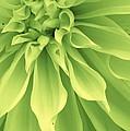 Green Sherbet by Bruce Bley