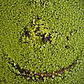 Green Smile by Wittaya Uengsuwanpanich