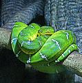 Green Snake by Randy Harris