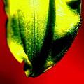 Green Tear by Konstantine Bak