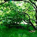 Green Tree by Rita Amirahmadi