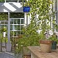 Greenery In A Garden Store by Andersen Ross